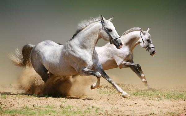 Giải mã giấc mơ thấy ngựa mang đến điềm báo gì