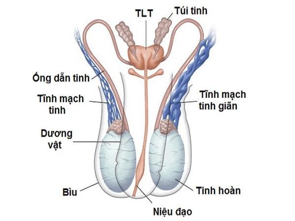 Giãn tĩnh mạch thừng tinh là gì?